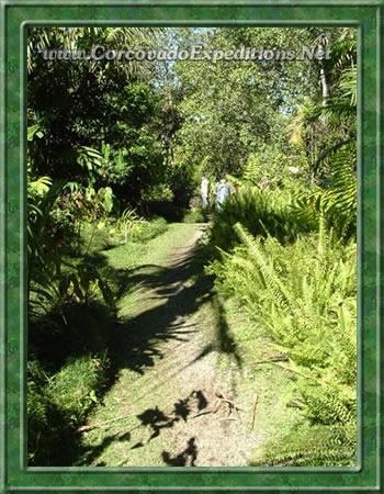 Senderos en los Jardínes Botanicos Wilson