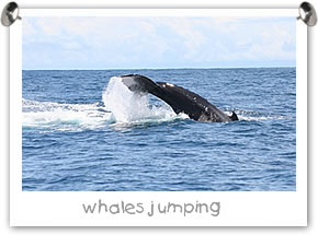 Whales Watching tour